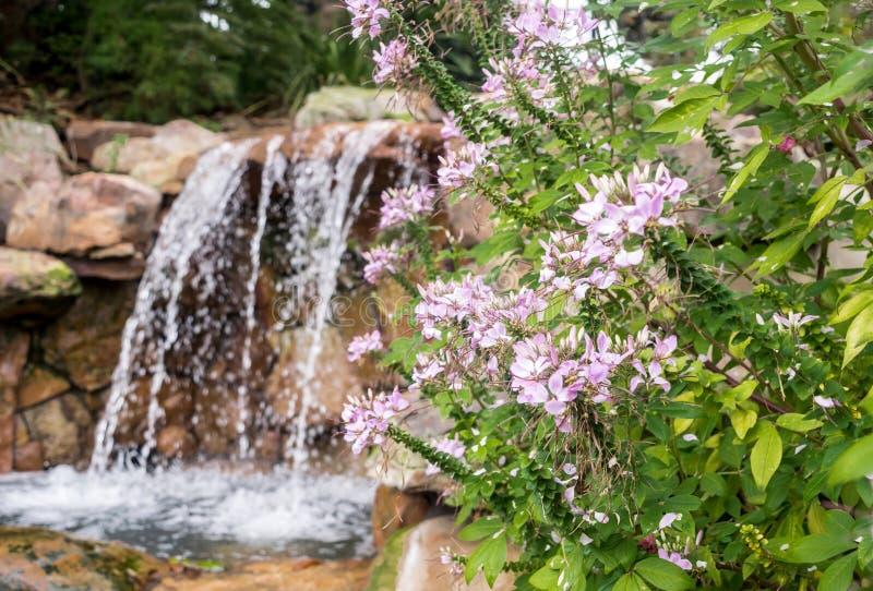 翻滚慢慢地反对与密集的绿色叶子的岩石的瀑布 免版税库存照片