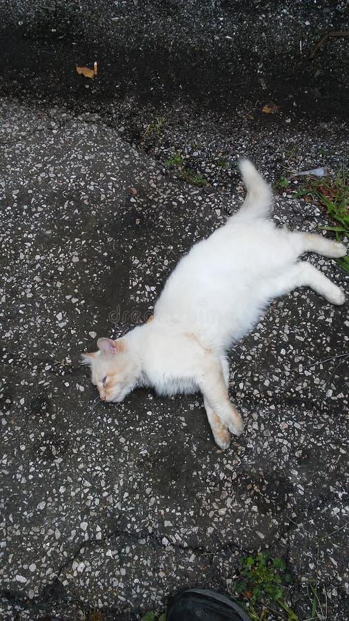 懒惰橙色猫 免版税库存图片