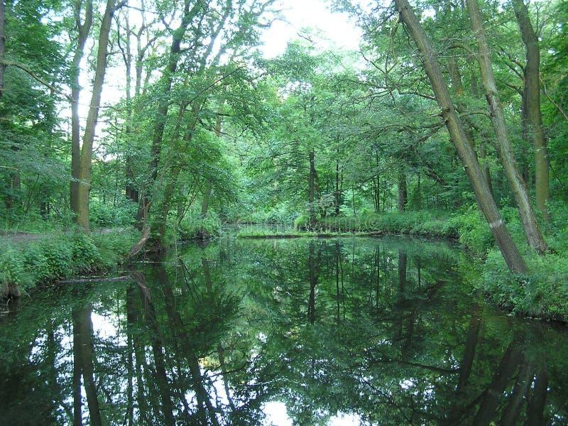 懒惰池塘2 库存照片