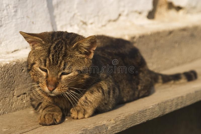 懒惰猫 库存图片