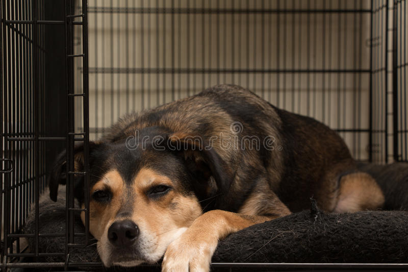 懒惰的狗 免版税库存照片