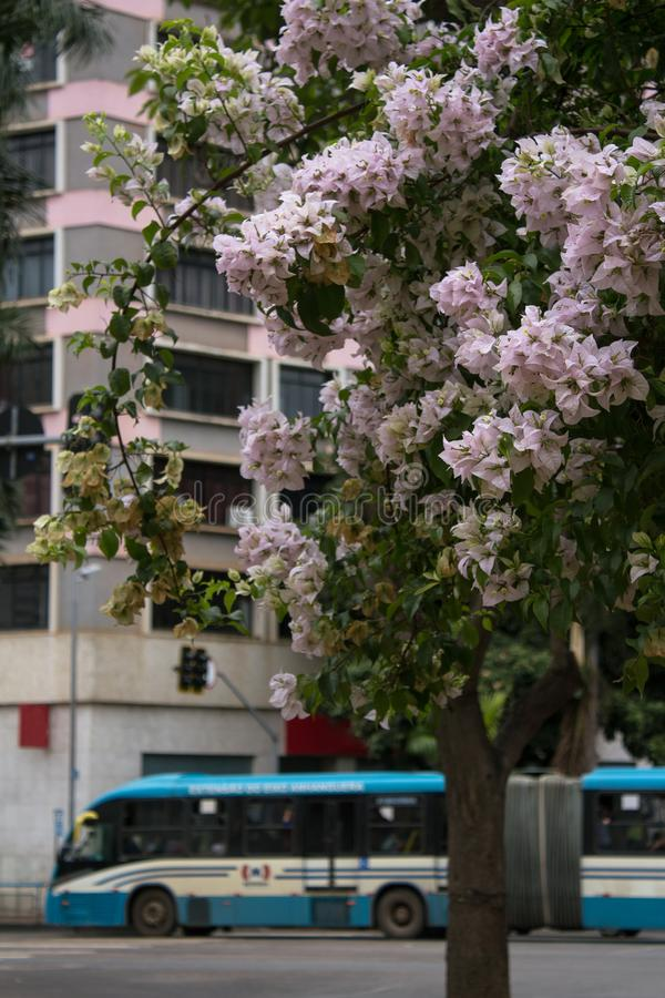 戈亚尼亚市,巴西公共交通工具  免版税图库摄影