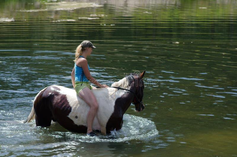 戈梅利,白俄罗斯- 2013年6月24日:沐浴马在湖 库存照片