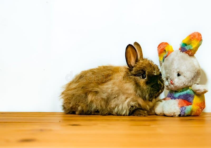 戏弄复活节兔子和真正的兔子成套工具与拷贝空间文本的 库存照片