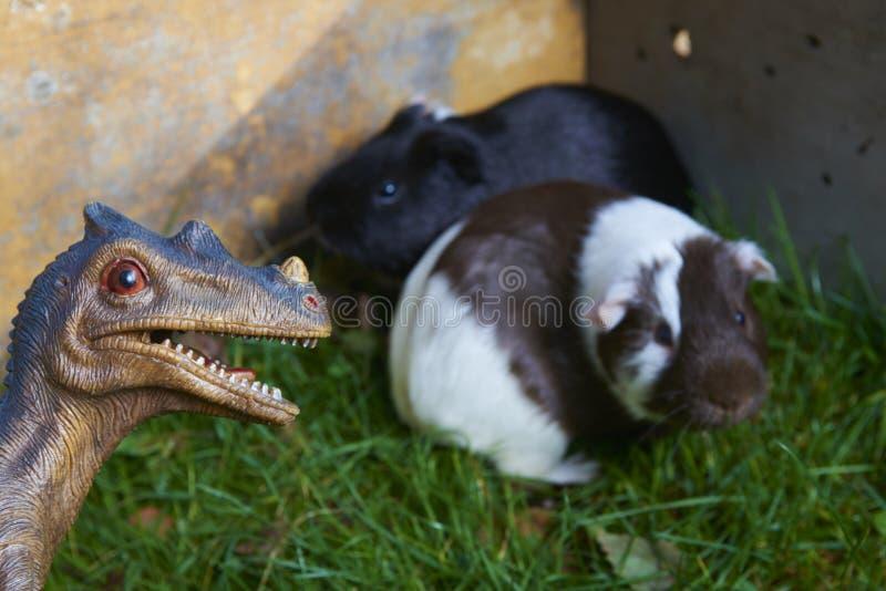 戏弄恐龙战斗与在绿草的新几内亚猪的妖怪猛禽 库存图片
