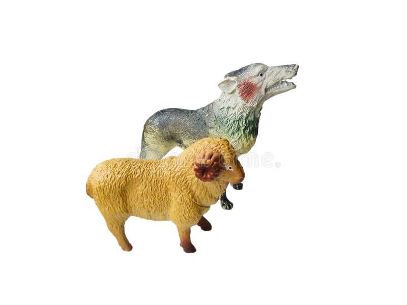 戏弄狼和一只绵羊在白色背景 免版税库存照片