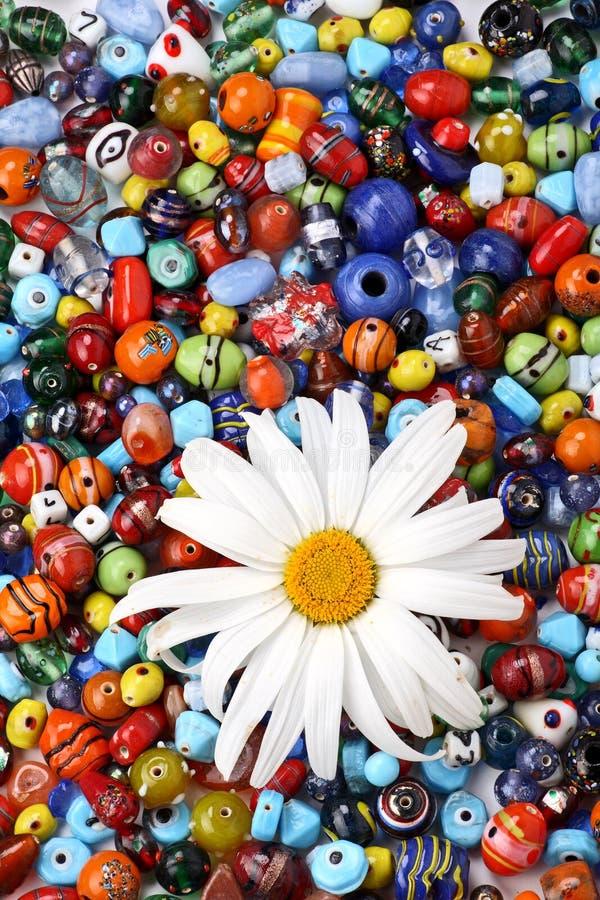 成串珠状五颜六色的雏菊 免版税库存图片
