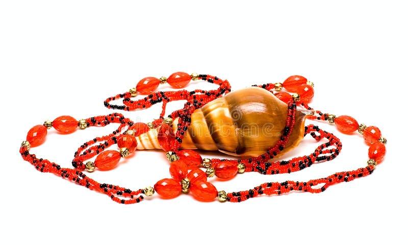 成串珠状海扇壳海洋 免版税库存图片