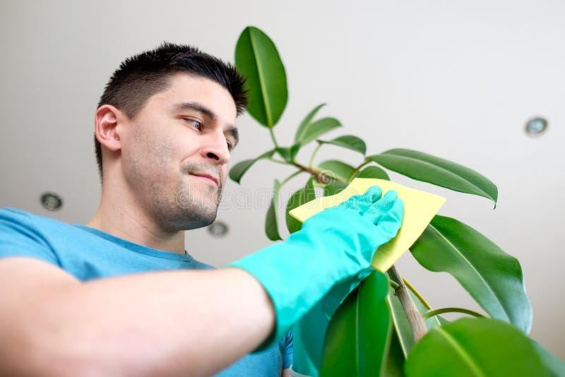 Download 成人人清洗pipal在厨房里 库存照片. 图片 包括有 手套, 白种人, 成人, 英俊, 绿色, 擦净剂 - 72362180