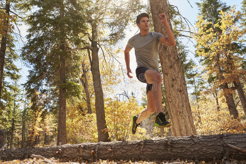 年轻成人人跑在森林里的,低角度视图 库存图片