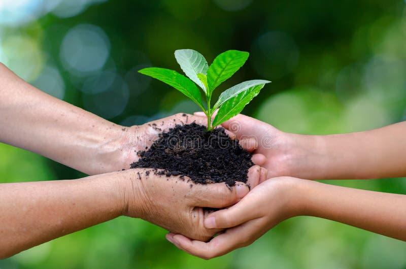 成人婴孩手树环境世界地球日在生长幼木的树的手上 举行tr的Bokeh绿色背景女性手 免版税库存图片
