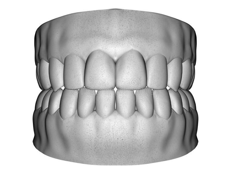 成人牙齿男性扫描 皇族释放例证