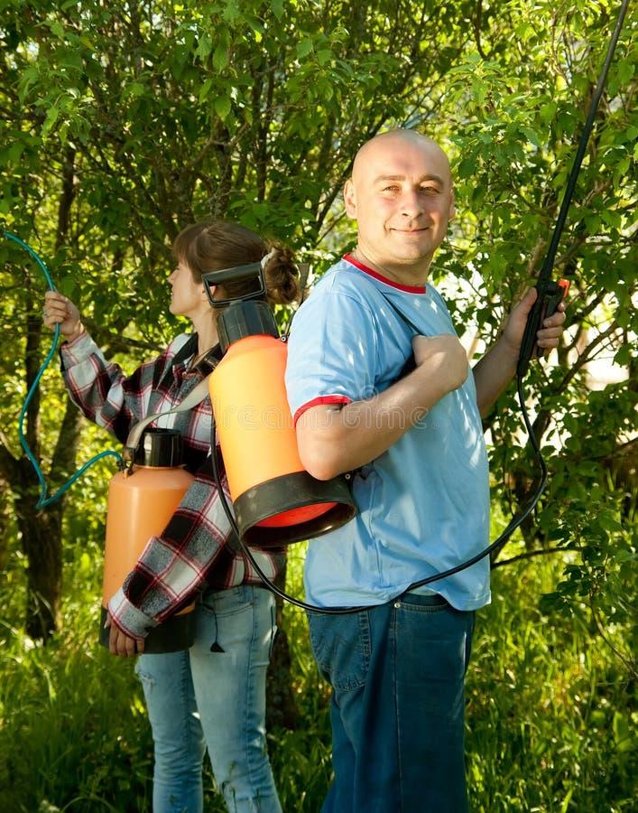 人和妇女被喷洒的树 库存图片
