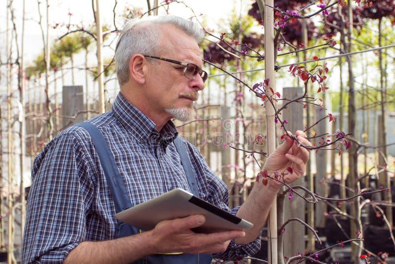 成人花匠检查植物病 拿着片剂的手 在玻璃,胡子,佩带的总体 在庭院里 免版税库存图片