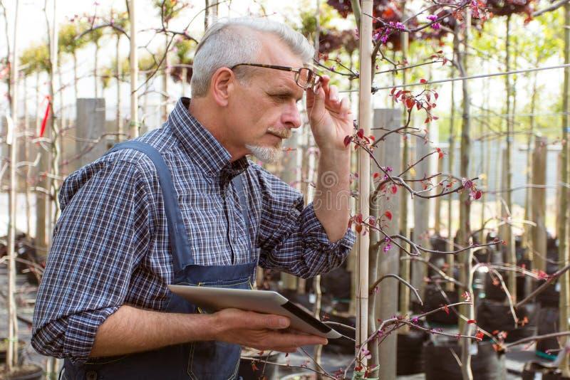 成人花匠检查植物病 拿着片剂的手 在玻璃,胡子,佩带的总体 在庭院里 库存照片