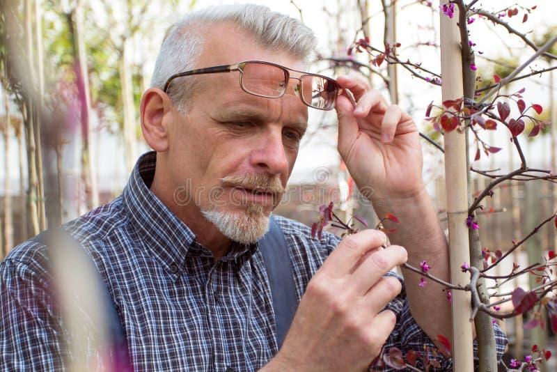 成人花匠检查植物病 拿着片剂的手 在玻璃,胡子,佩带的总体 在庭院里 库存图片