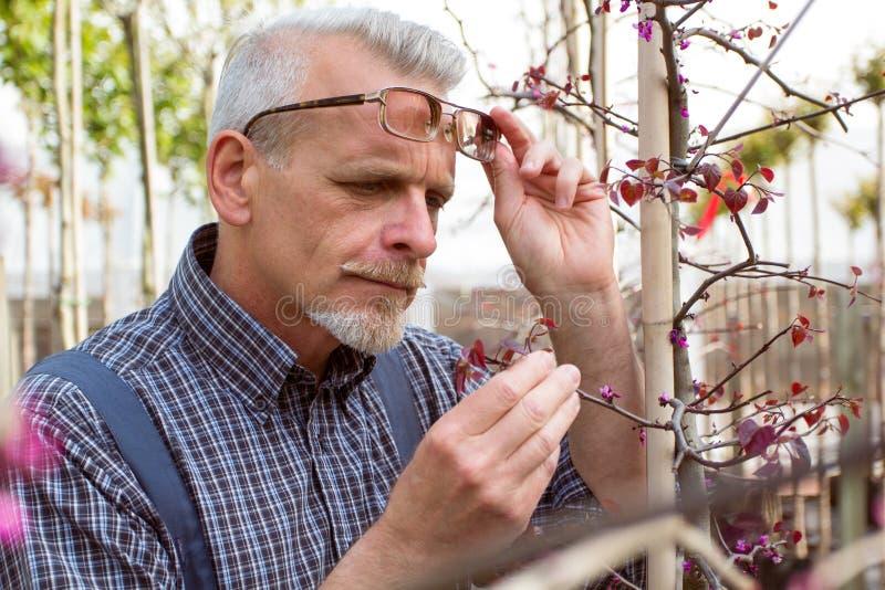 成人花匠检查植物病 拿着片剂的手 在玻璃,胡子,佩带的总体 在庭院里 图库摄影
