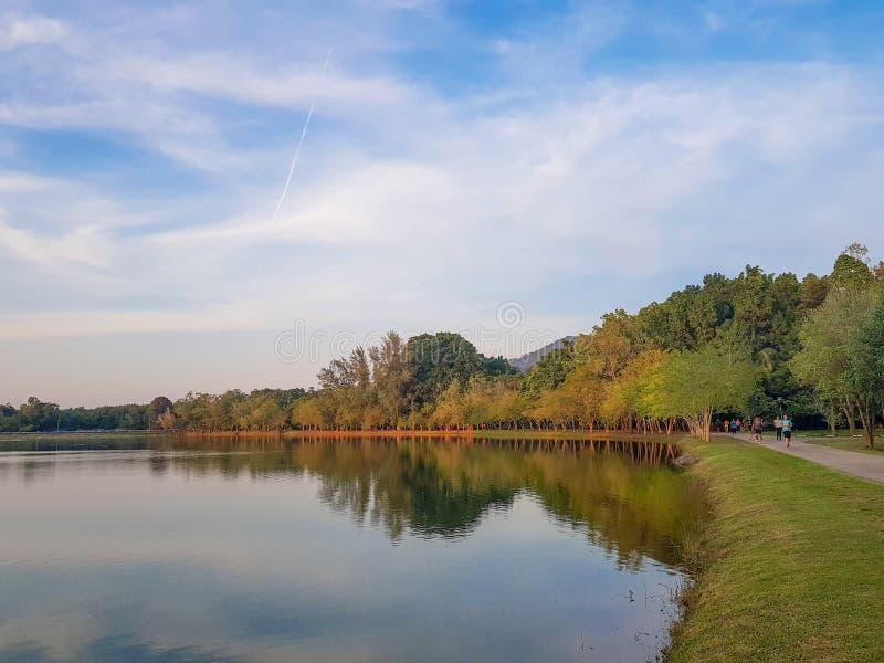 成人,有一友好环境在宋卡大学的人们有锻炼通过跑步在和平自然地方中 库存图片