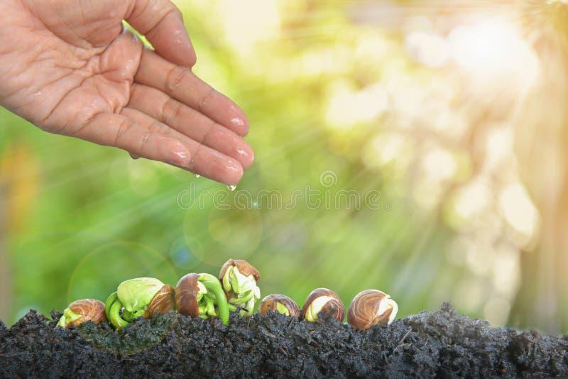 强插幼幼交_成功作为生长作为概念的强的幼木. 初学者, 增长.