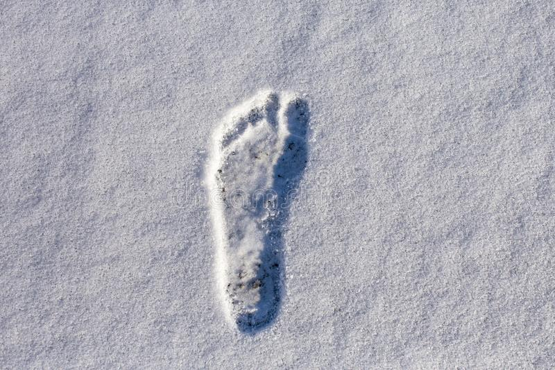 成年男性赤足正确的脚印在蓬松白色雪的 图库摄影