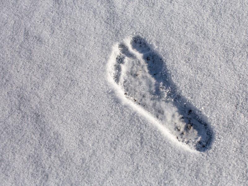成年男性赤足正确的脚印在蓬松白色雪的 库存图片