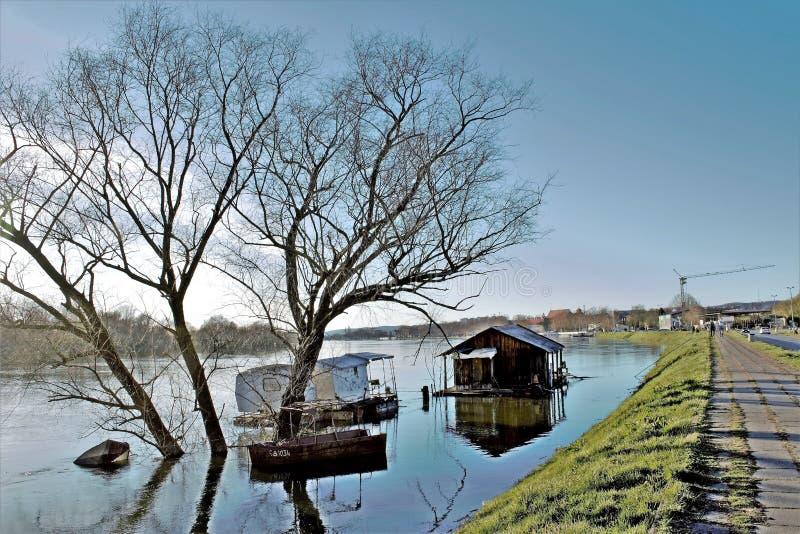 成水平树的水 免版税库存照片