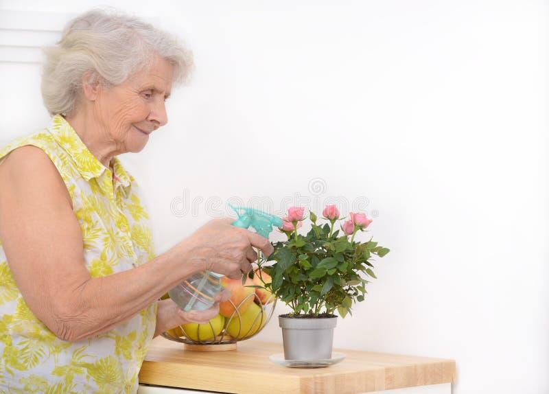 成熟可爱的妇女浇灌的花在家 库存照片