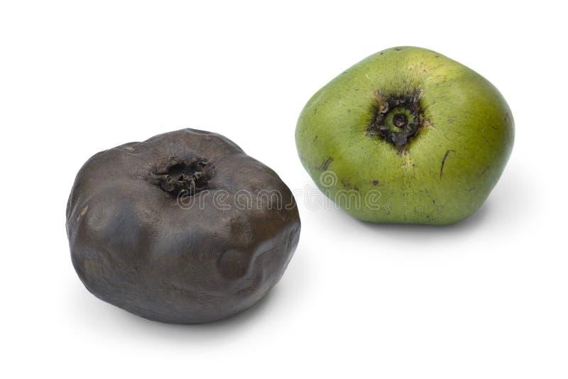 成熟和未成熟的黑美洲热带树果子 库存照片