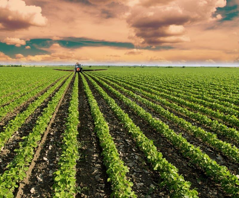 成熟在春季,农业风景的大豆领域 红色拖拉机喷洒的领域 库存照片