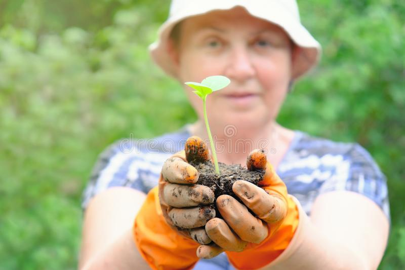 成熟妇女花匠或农夫用小绿色植物新芽在她的手上在自然背景 免版税库存照片