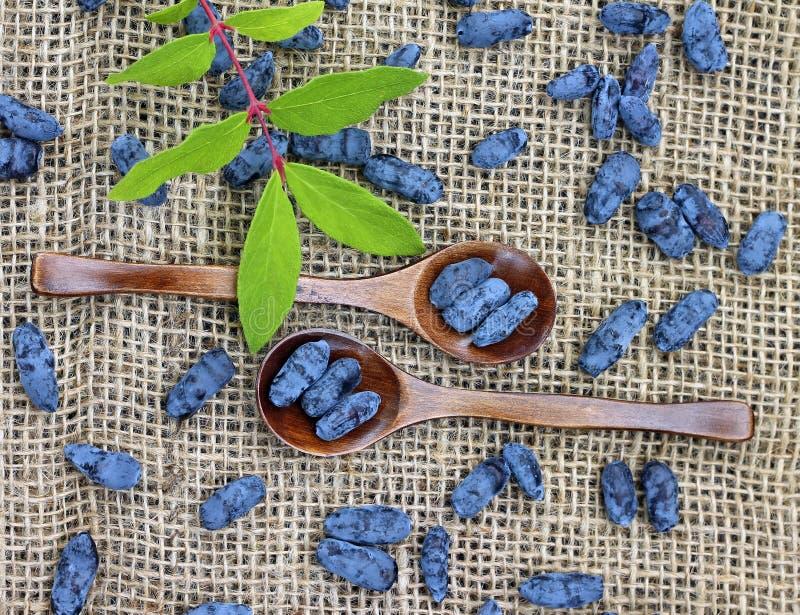 成熟忍冬属植物莓果的图象在木匙子的 免版税库存图片