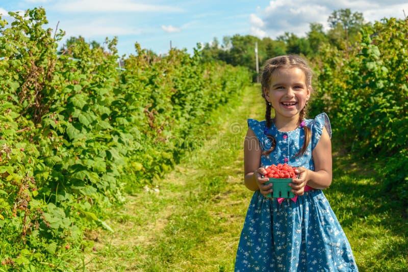 成熟新鲜的莓在女孩手上 库存图片