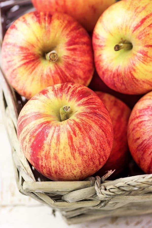 成熟有机红色镶边苹果堆在一个柳条筐的 白色板条木庭院或厨房用桌 免版税库存照片