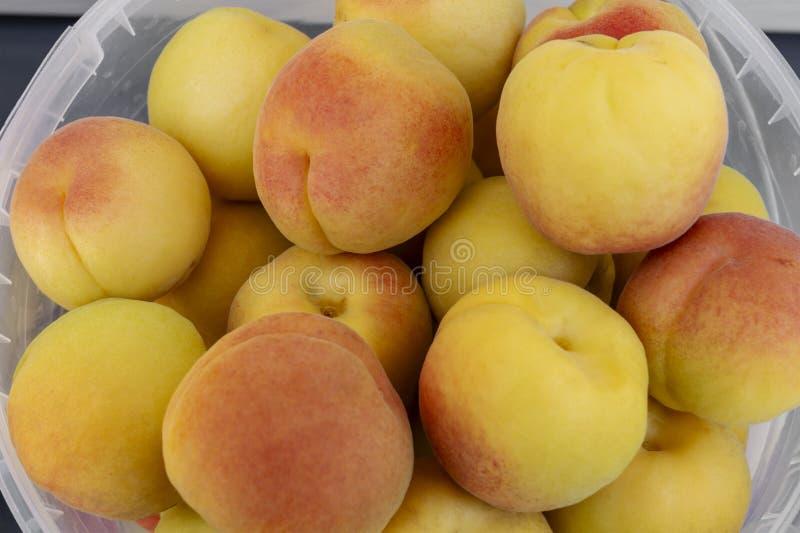 成熟杏子新收获  非常在一个清楚的桶的大明亮的美丽的水多的成熟杏子 夏天收获的概念, 免版税库存图片