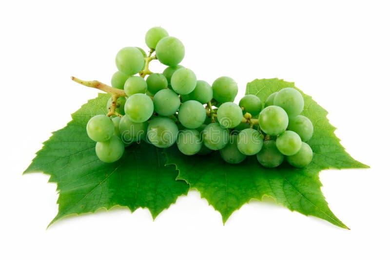 成熟束葡萄绿色查出的叶子 库存照片