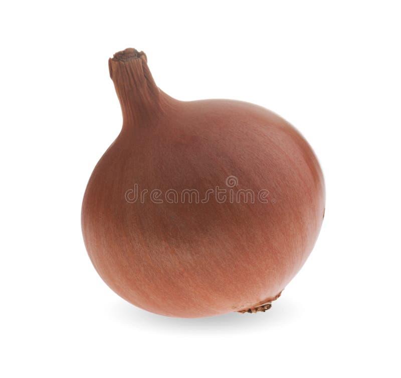 成熟棕色葱。 免版税图库摄影