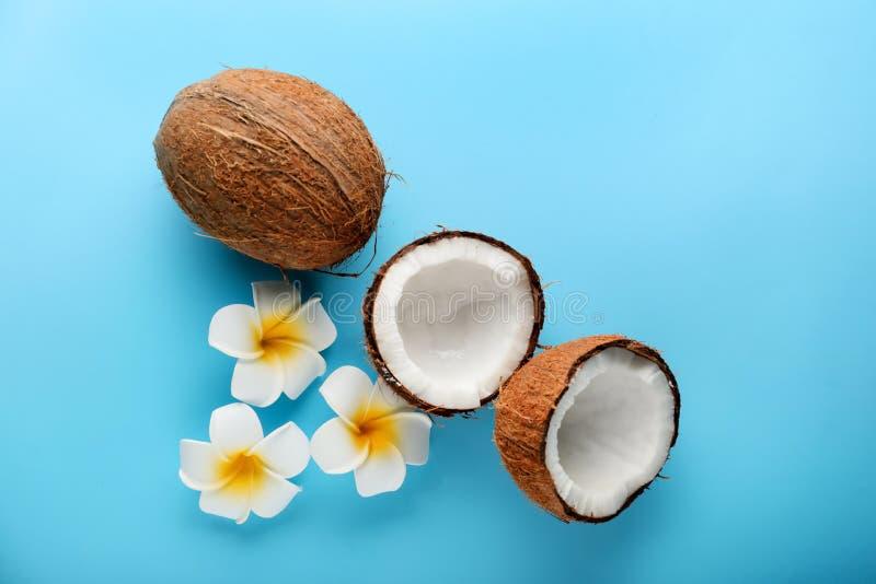 成熟椰子和花在颜色背景 免版税图库摄影