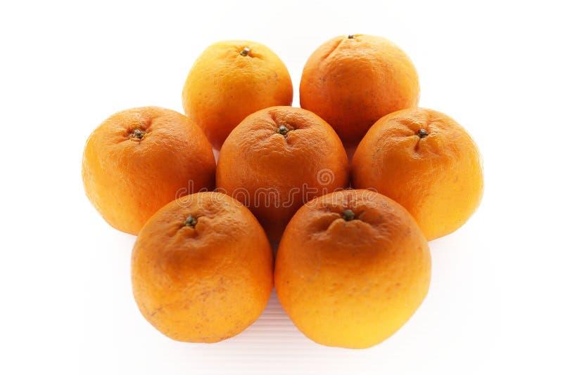 成熟橘子 免版税库存照片