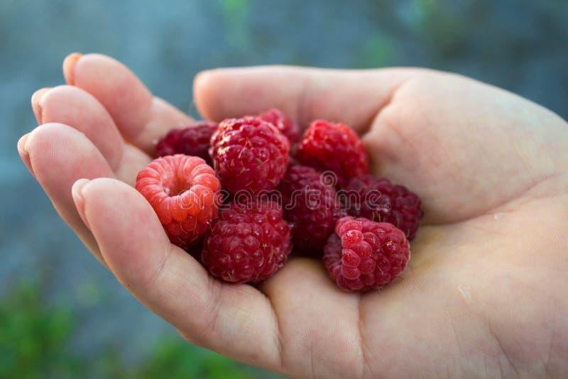 成熟水多的鲜美莓在女孩的手上 免版税库存照片