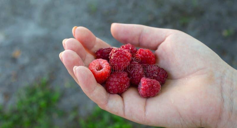 成熟水多的鲜美莓在女孩的手上 免版税库存图片