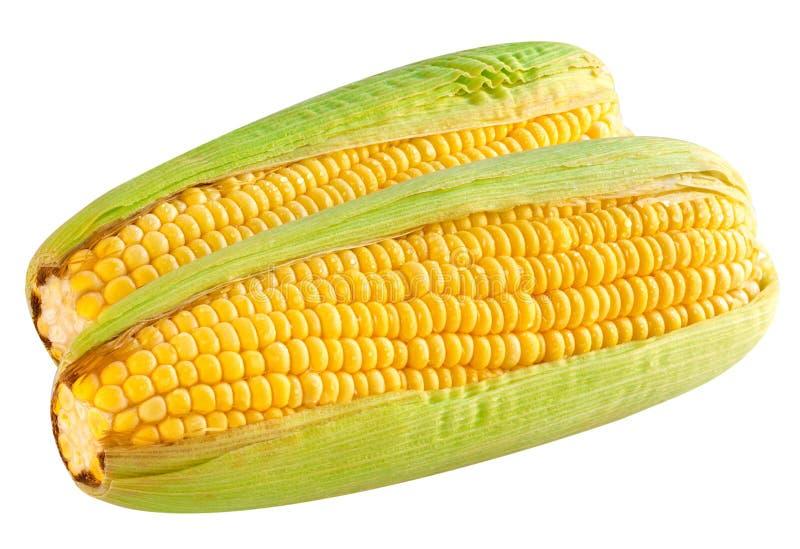 成熟玉米棒的玉米 免版税库存照片