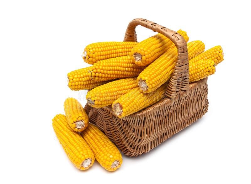 成熟玉米穗在一个篮子的在白色背景.图片