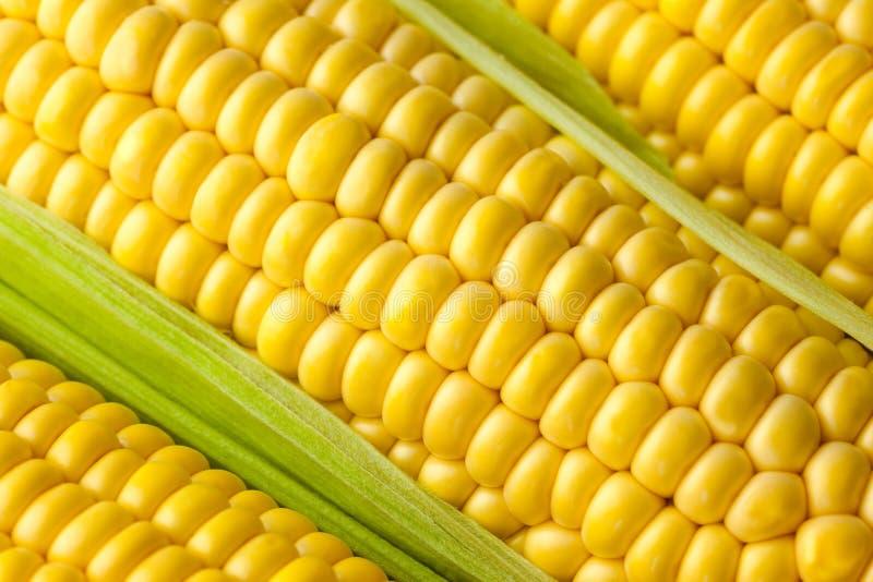 成熟玉米/宏指令谷物  免版税库存图片