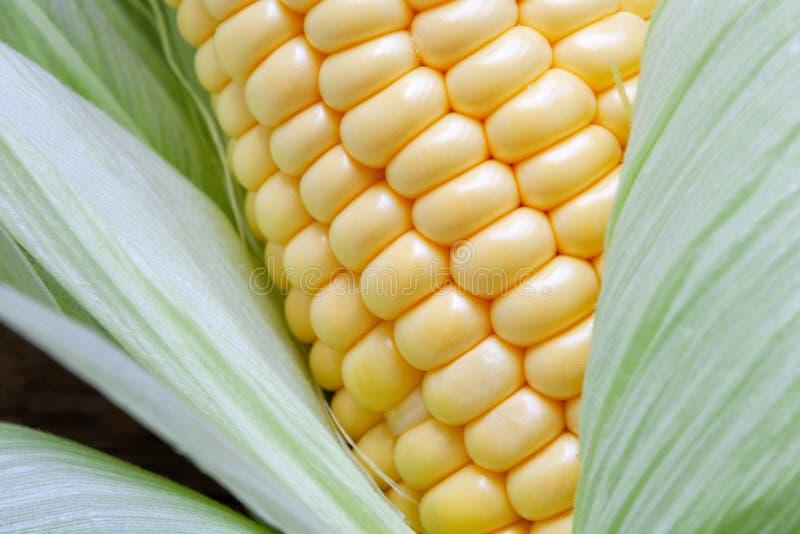 成熟甜玉米五谷和叶子  免版税图库摄影