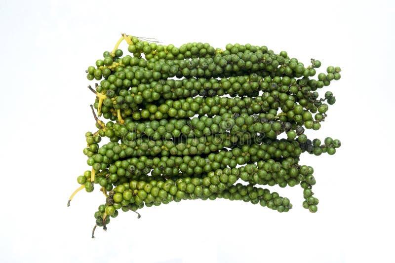 成熟的绿色干胡椒茎 库存照片