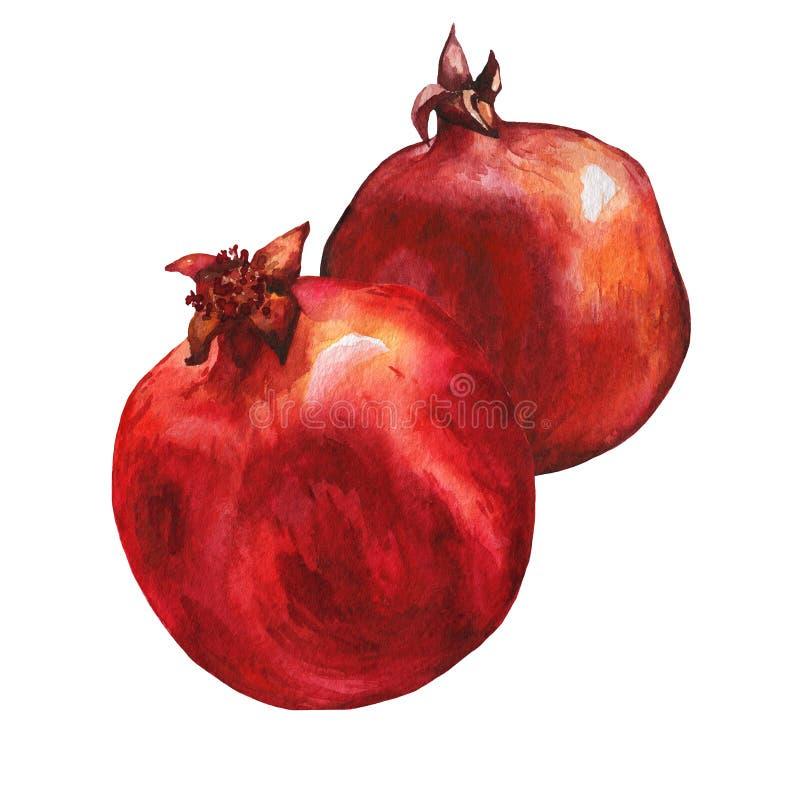 成熟石榴果子的例证 向量例证