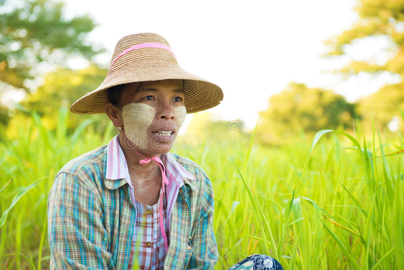 成熟缅甸农夫 库存图片