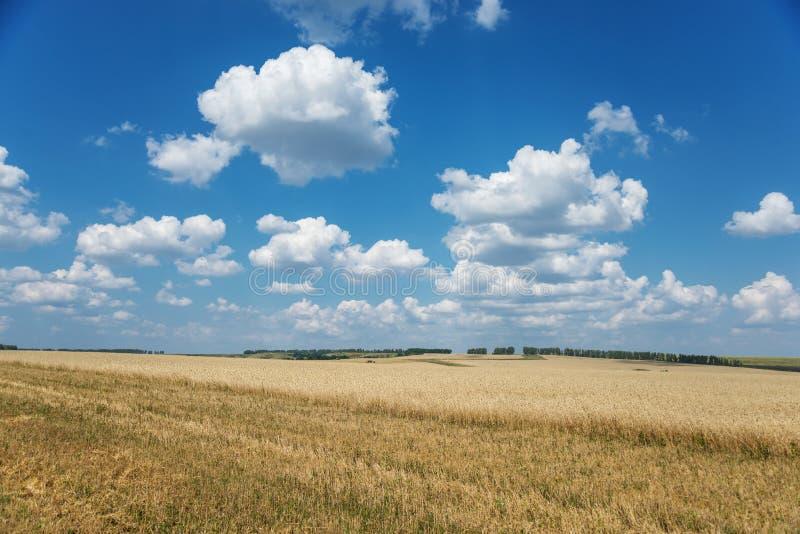 成熟麦子和天空的领域与云彩 免版税库存照片