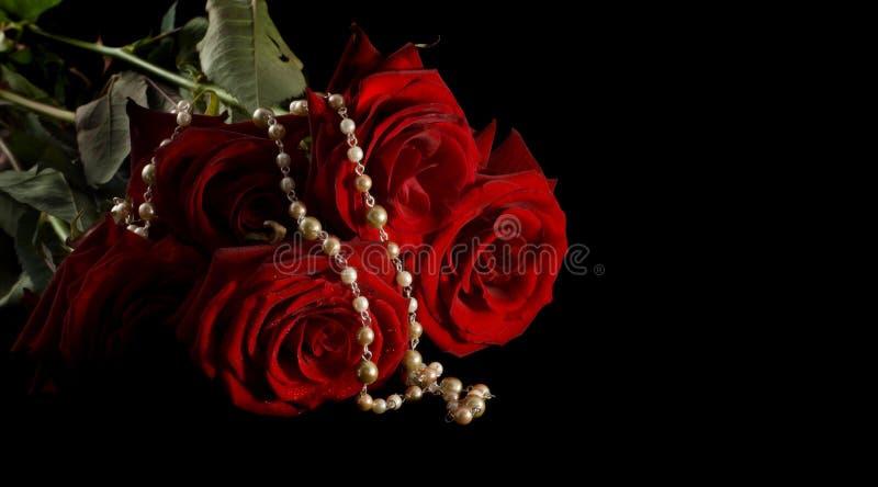 成珠状玫瑰 免版税库存图片