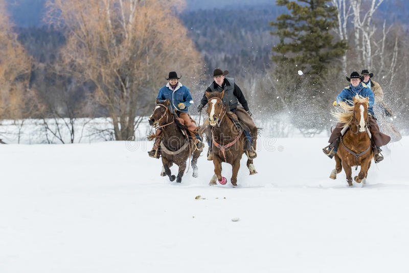 成群在雪的牛仔马 免版税库存照片